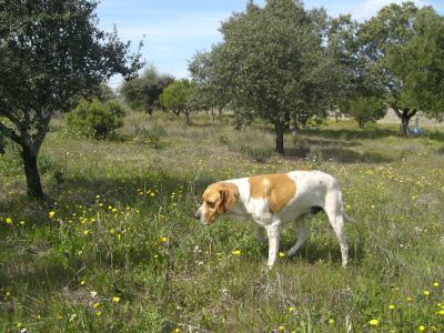 Nico en el campo