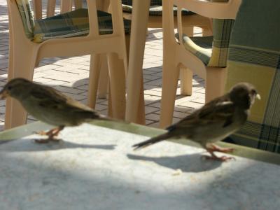 Par de pájaros