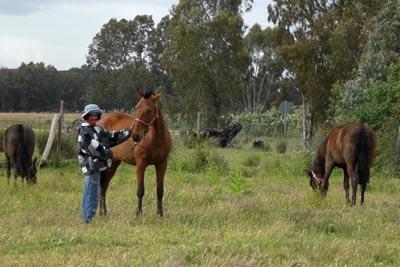 Susurrando a los caballos